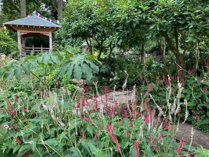 Chelsea garden show- 50th anniversary garden