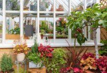 greenhouse organisation