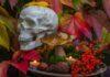 Halloween plants- 10 poisonous plants