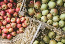 Harvest apples (Heligan/PA)