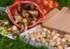 a collection of bulbs, how to achieve success with summer flowering bulbs