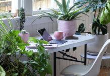 best office plants guide