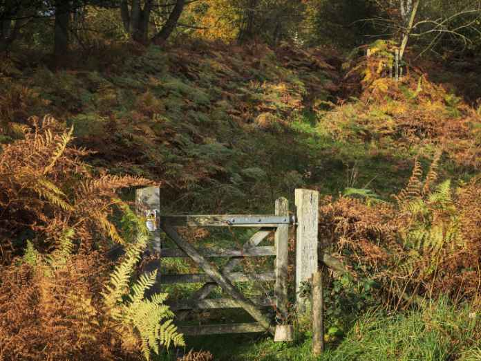 Striking autumnal colours in the Great Wood, part of the old deer park at Felbrigg Hall