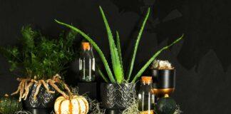 Halloween houseplants