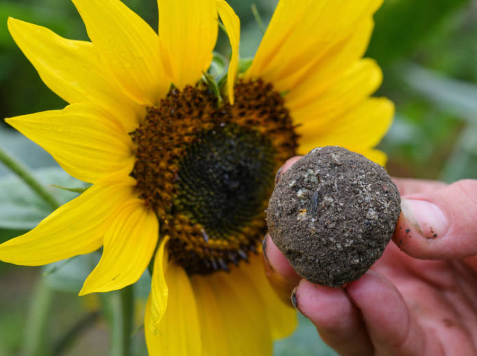 Sow your seed bombs