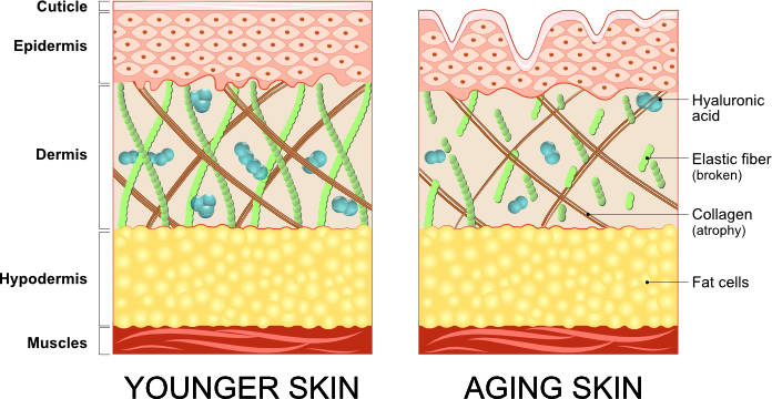 How our skin changes as we age infographic